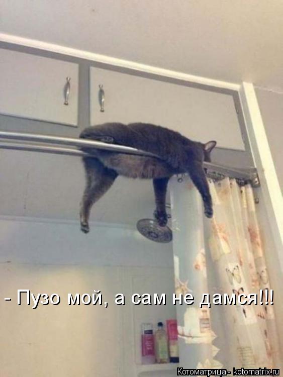 Котоматрица: - Пузо мой, а сам не дамся!!!