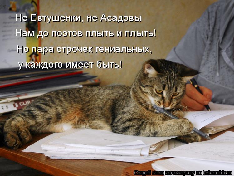 Котоматрица: Не Евтушенки, не Асадовы Нам до поэтов плыть и плыть! Но пара строчек гениальных, у каждого имеет быть!