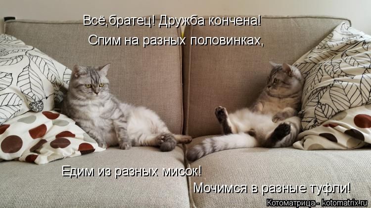 Котоматрица: Всё,братец! Дружба кончена! Спим на разных половинках, Едим из разных мисок! Мочимся в разные туфли!