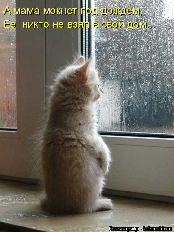 Котоматрица: А мама мокнет под дождем, Ее  никто не взял в свой дом...