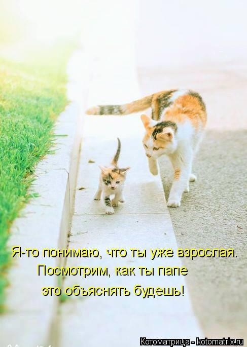 Котоматрица: Я-то понимаю, что ты уже взрослая. Посмотрим, как ты папе это объяснять будешь!