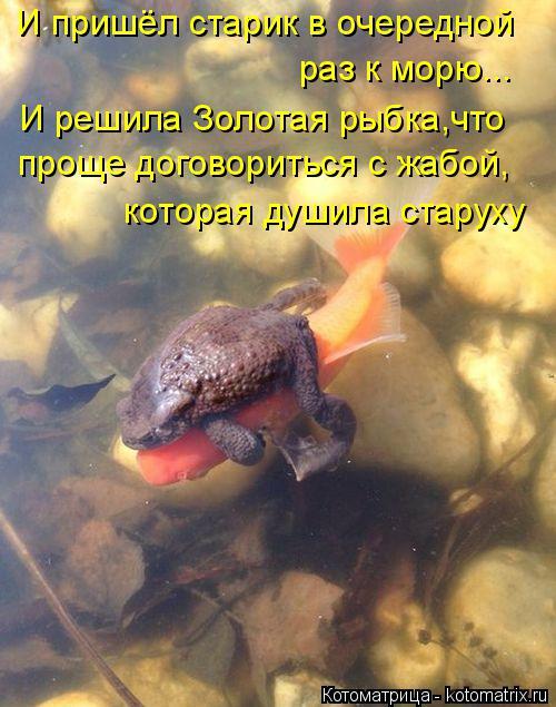 Котоматрица: И пришёл старик в очередной  раз к морю... И решила Золотая рыбка,что проще договориться с жабой, которая душила старуху