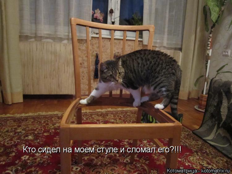 Котоматрица: Кто сидел на моем стуле и сломал его?!!!