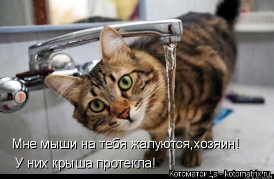Котоматрица: Мне мыши на тебя жалуются,хозяин! У них крыша протекла!