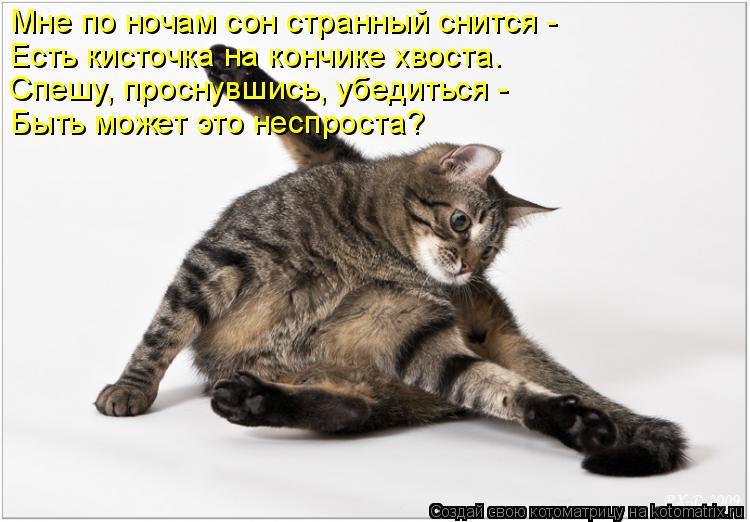 Котоматрица: Мне по ночам сон странный снится -  Есть кисточка на кончике хвоста. Спешу, проснувшись, убедиться -  Быть может это неспроста?