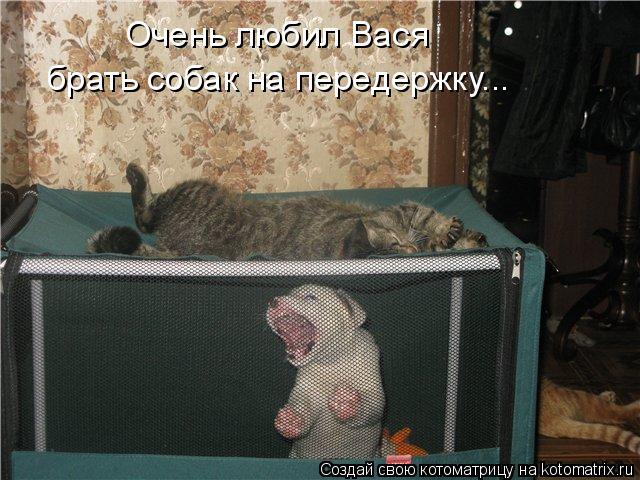 Котоматрица: Очень любил Вася  брать собак на передержку...