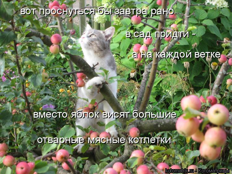 Котоматрица: вот проснуться бы завтра рано в сад придти -  а на каждой ветке вместо яблок висят большие отварные мясные котлетки