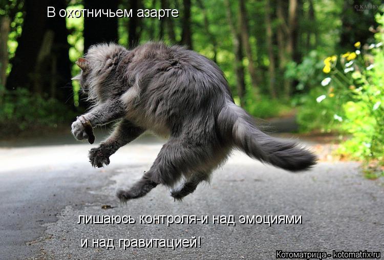 Котоматрица: В охотничьем азарте лишаюсь контроля-и над эмоциями и над гравитацией!