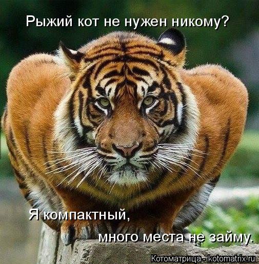 Котоматрица: Рыжий кот не нужен никому? Я компактный, много места не займу.