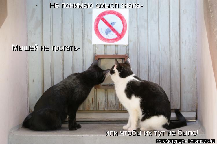 Котоматрица: Не понимаю смысл знака- Мышей не трогать- или чтобы их тут не было!