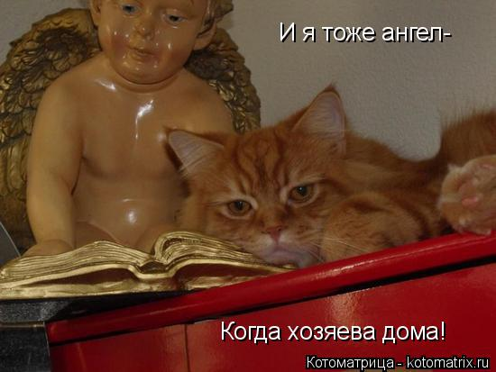 Котоматрица: И я тоже ангел- Когда хозяева дома!