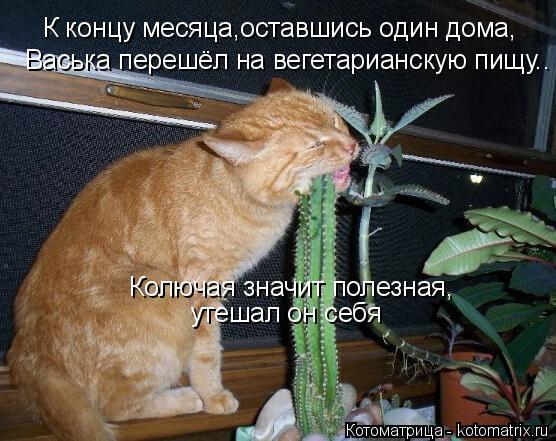 Котоматрица: К концу месяца,оставшись один дома, Васька перешёл на вегетарианскую пищу.. Колючая значит полезная, утешал он себя
