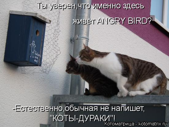 """Котоматрица: Ты уверен,что именно здесь живёт ANGRY BIRD? -Естественно,обычная не напишет, """"КОТЫ-ДУРАКИ""""!"""