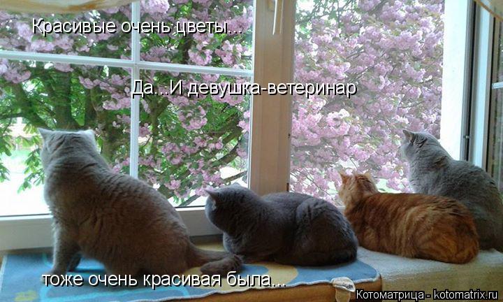 Котоматрица: Красивые очень цветы... Да...И девушка-ветеринар тоже очень красивая была...