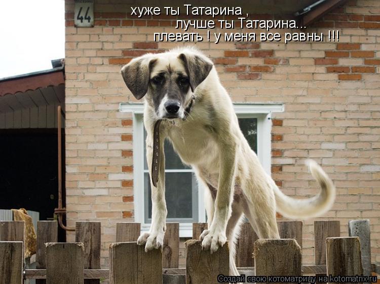 Котоматрица: хуже ты Татарина , лучше ты Татарина... плевать ! у меня все равны !!!
