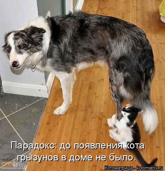 Котоматрица: Парадокс: до появления кота  грызунов в доме не было.