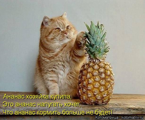 Котоматрица: Ананас хозяйка купила, Это ананас напугать хочет, Что ананас кормить больше не будет!