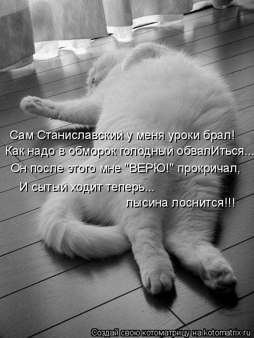 """Котоматрица: Сам Станиславский у меня уроки брал! Как надо в обморок голодный обвалИться... Он после этого мне """"ВЕРЮ!"""" прокричал, И сытый ходит теперь...   лы"""