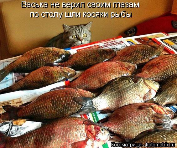 Котоматрица: Васька не верил своим глазам по столу шли косяки рыбы