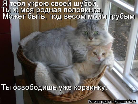 Котоматрица: Я тебя укрою своей шубой, Ты ж моя родная половинка, Может быть, под весом моим грубым Ты освободишь уже корзинку!