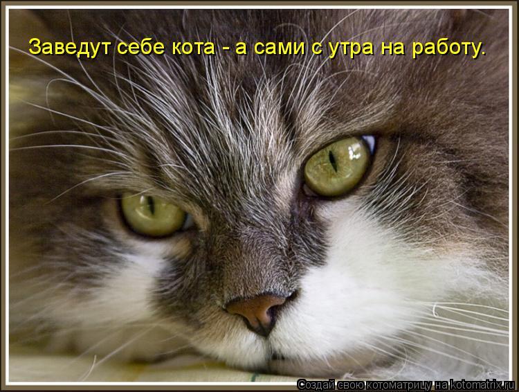 Котоматрица: Заведут себе кота - а сами с утра на работу.