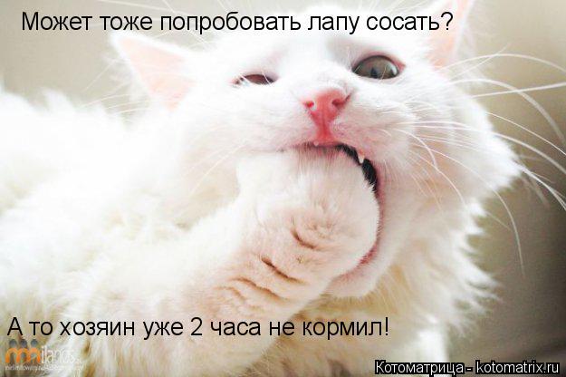 Котоматрица: Может тоже попробовать лапу сосать? А то хозяин уже 2 часа не кормил!