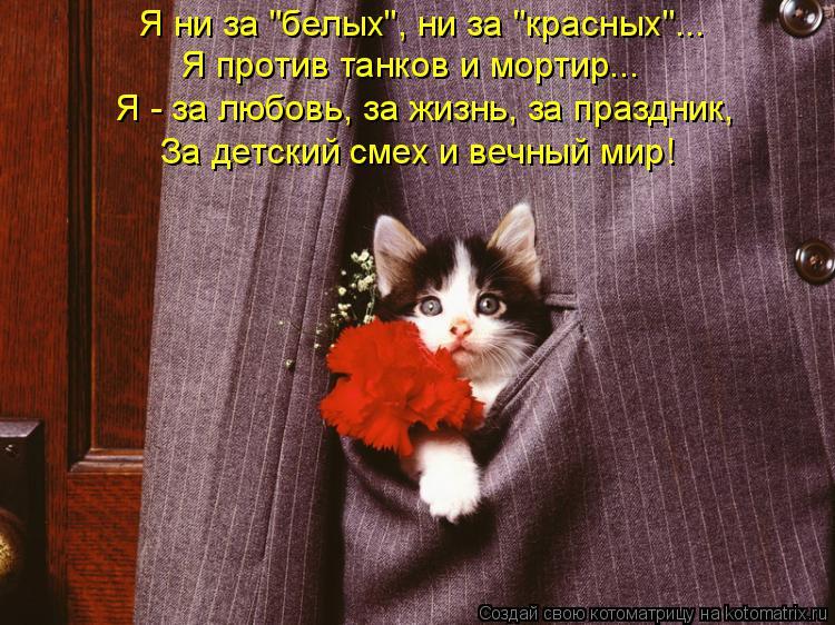"""Котоматрица: Я ни за """"белых"""", ни за """"красных""""... Я против танков и мортир... Я - за любовь, за жизнь, за праздник, За детский смех и вечный мир!"""