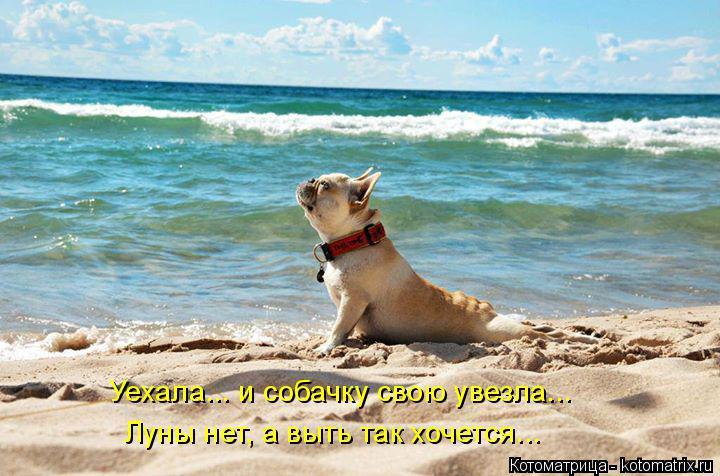 Котоматрица: Уехала... и собачку свою увезла... Луны нет, а выть так хочется...