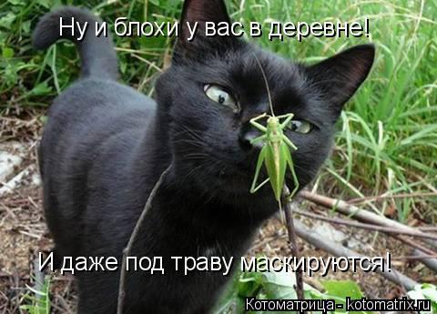 Котоматрица: Ну и блохи у вас в деревне! И даже под траву маскируются!