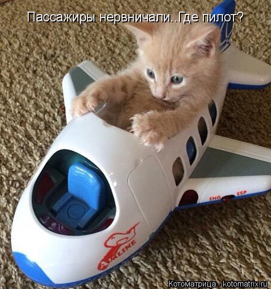 Котоматрица: Пассажиры нервничали..Где пилот?