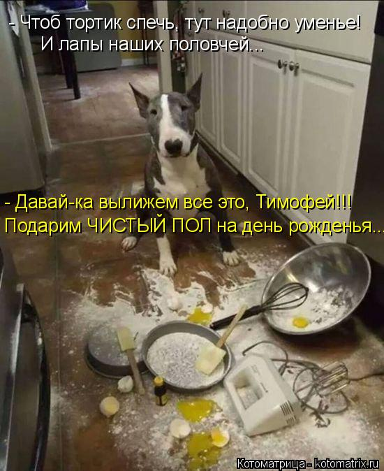Котоматрица: - Давай-ка вылижем все это, Тимофей!!! Подарим ЧИСТЫЙ ПОЛ на день рожденья...  - Чтоб тортик спечь, тут надобно уменье! И лапы наших половчей...