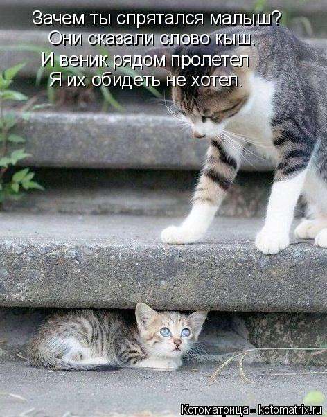Котоматрица: Зачем ты спрятался малыш? Они сказали слово кыш. И веник рядом пролетел Я их обидеть не хотел.