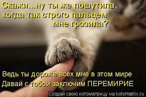 Котоматрица: Скажи...ну ты же пошутила, когда так строго пальцем  мне грозила? Ведь ты дороже всех мне в этом мире Давай с тобой заключим ПЕРЕМИРИЕ