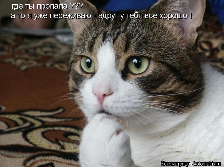 Котоматрица: где ты пропала ??? а то я уже переживаю - вдруг у тебя все хорошо !