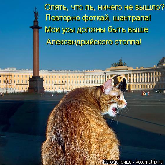 Котоматрица: Опять, что ль, ничего не вышло? Повторно фоткай, шантрапа! Мои усы должны быть выше Александрийского столпа!