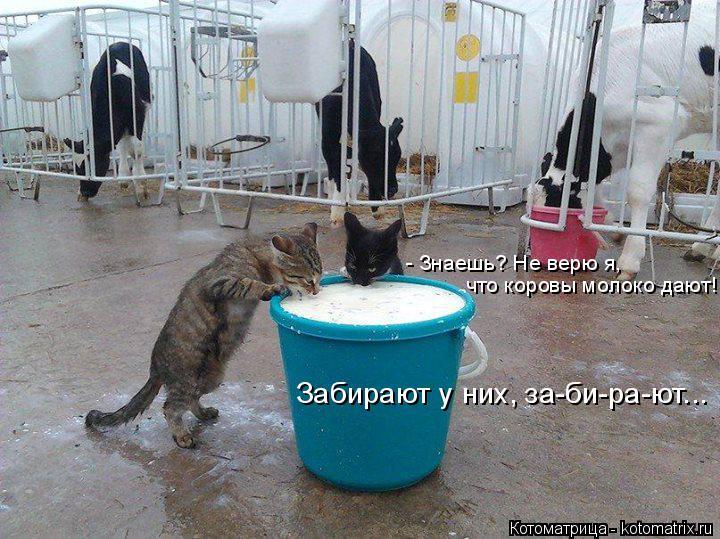 Котоматрица: - Знаешь? Не верю я, что коровы молоко дают! Забирают у них, за-би-ра-ют...
