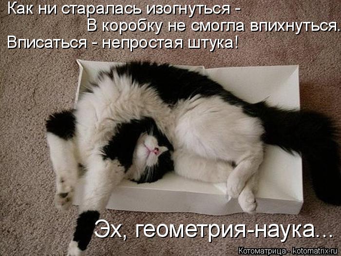 Котоматрица: Как ни старалась изогнуться - В коробку не смогла впихнуться. Вписаться - непростая штука! Эх, геометрия-наука...
