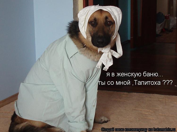 Котоматрица: я в женскую баню... ты со мной ,Тапитоха ???