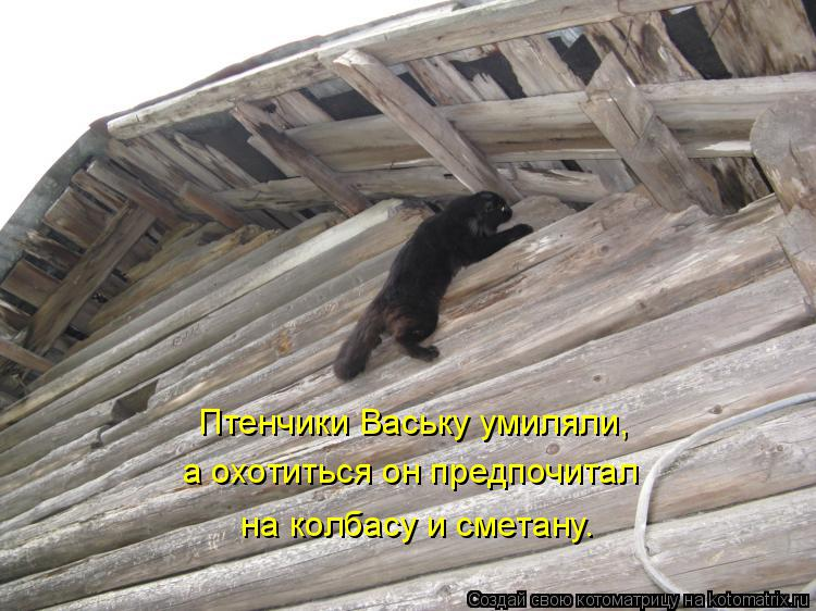 Котоматрица: Птенчики Ваську умиляли,  а охотиться он предпочитал   на колбасу и сметану.