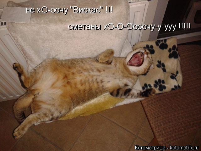 """Котоматрица: не хО-оочу """"Вискас"""" !!! сметаны хО-О-Оооочу-у-ууу !!!!!"""