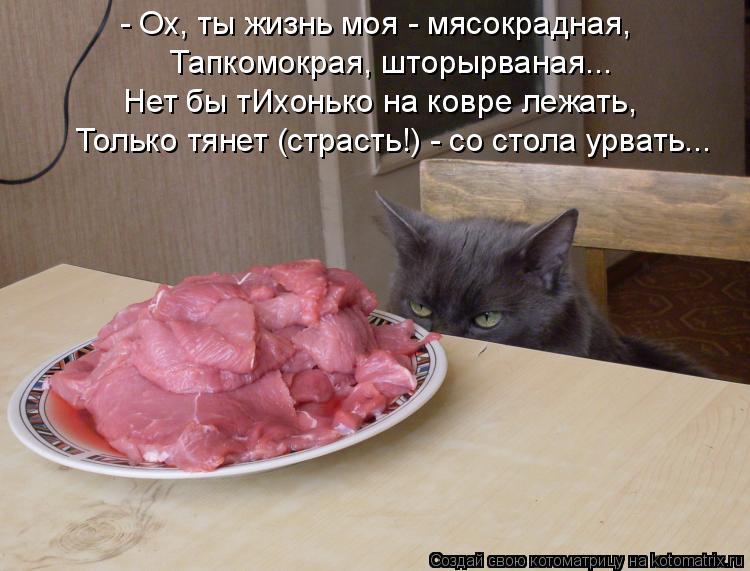 Котоматрица: - Ох, ты жизнь моя - мясокрадная, Тапкомокрая, шторырваная... Нет бы тИхонько на ковре лежать, Только тянет (страсть!) - со стола урвать...