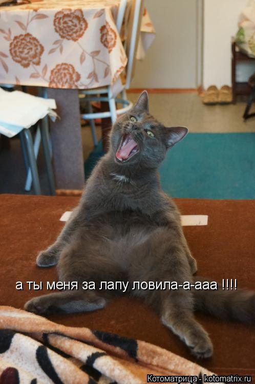 Котоматрица: а ты меня за лапу ловила-а-ааа !!!!