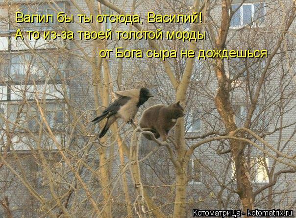 Котоматрица: Валил бы ты отсюда, Василий! А то из-за твоей толстой морды  от Бога сыра не дождешься
