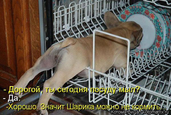 Котоматрица: -Хорошо. Значит Шарика можно не кормить... - Да. - Дорогой, ты сегодня посуду мыл?