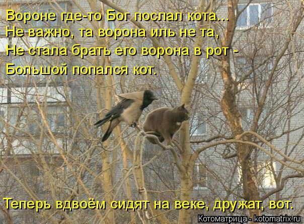 Котоматрица: Не важно, та ворона иль не та, Вороне где-то Бог послал кота... Не стала брать его ворона в рот - Большой попался кот. Теперь вдвоём сидят на век