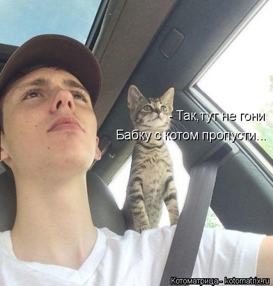 Котоматрица: - Так,тут не гони Бабку с котом пропусти...