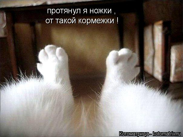 Котоматрица: протянул я ножки , от такой кормежки !