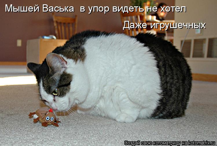Котоматрица: Мышей Васька  в упор видеть не хотел Даже игрушечных