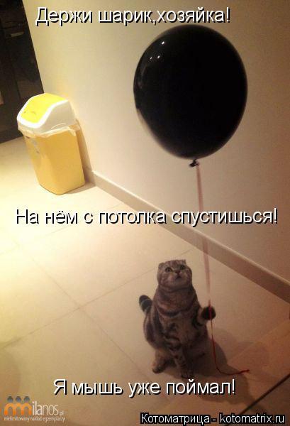 Котоматрица: Держи шарик,хозяйка! На нём с потолка спустишься! Я мышь уже поймал!