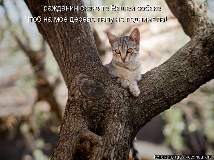 Котоматрица: Гражданин,скажите Вашей собаке, Чтоб на моё дерево лапу не поднимала!